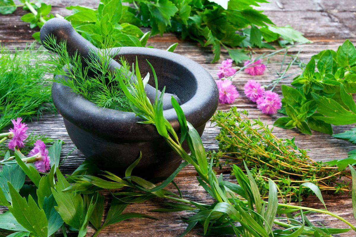 pragati herbal garden resorts in hyderabad